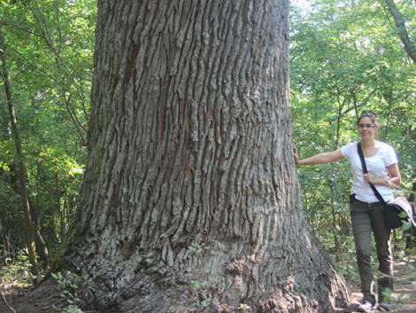 Végveszélyben vannak a magyar erdők?