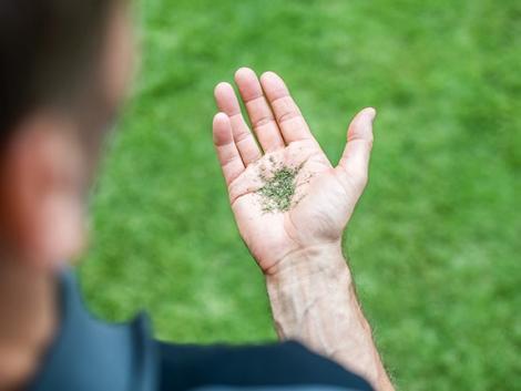 Gyorsabb, olcsóbb  és még a talajnak is jó – tudj meg többet a mulcsozó fűnyírásról!