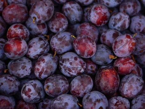 Megdöbbentő adatok a lengyel gyümölcstermésről