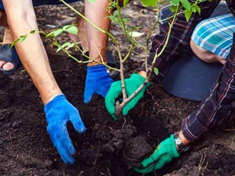 Így biztosan nem fagynak el a kerti virágaid – a növénytakarás fortélyai