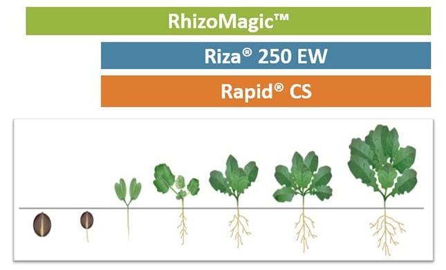 RhizoMagic növekedés diagram