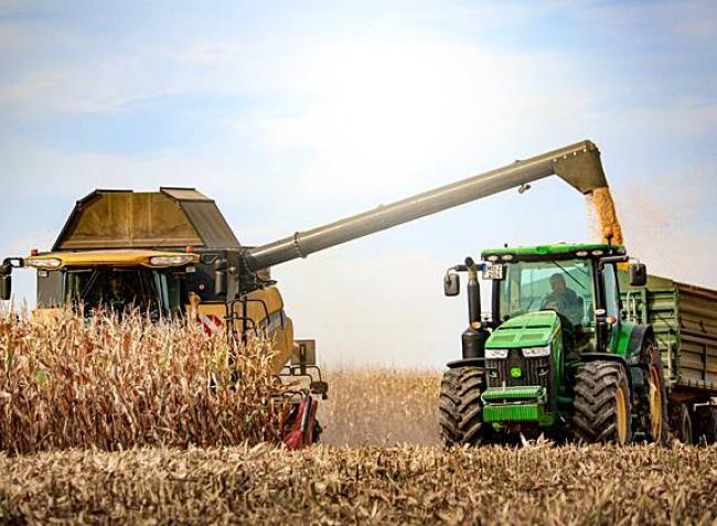Mennyit hoz idén a kukorica? Terméseredmények és árak itthon és külföldön