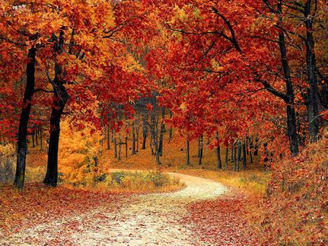 Végleg elveszíthetjük az őszt, és ennek a kártevők örülnek a legjobban