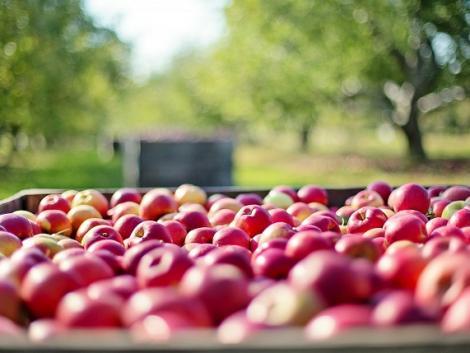 82 agrárszakmai program kap támogatást