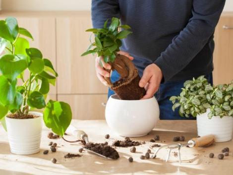 Így ápold ősszel a szobanövényeidet