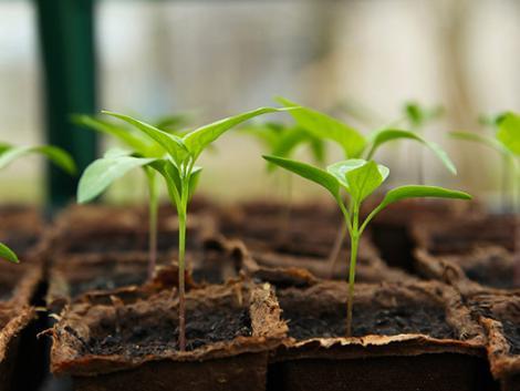 Zajlik az ültetőközegek forradalma: cél a fenntarthatóság