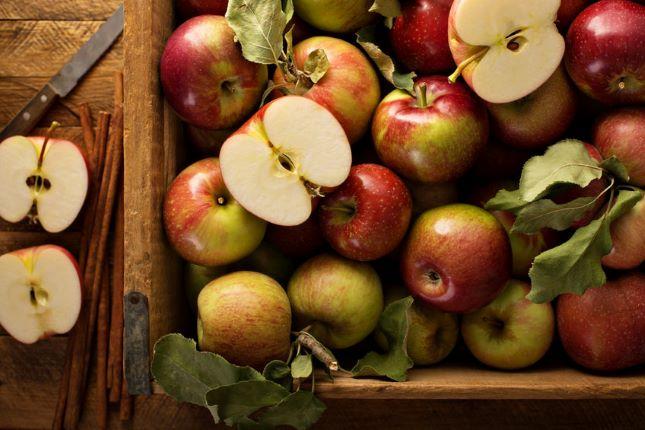 alma ősz