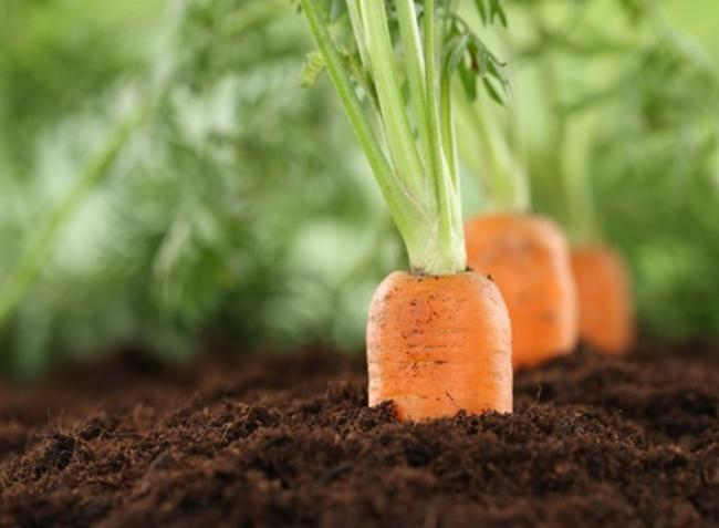 A zöldségeidnek erre mindenképp szükségük van! Így végezd el a foszfortrágyázást!