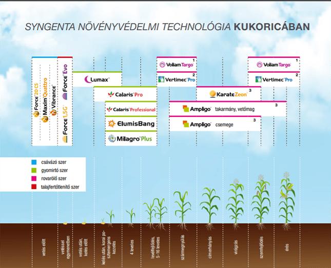 Syngenta növényvédelmi technológia kukoricában