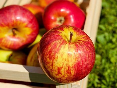Pánikolnak a lengyel almatermesztők – nagy bajban lesznek ukrán munkások nélkül