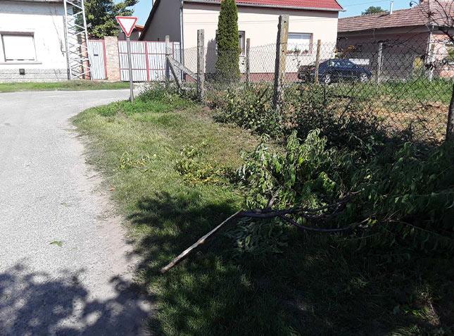 gyümölcsfa kivágás garázdaság