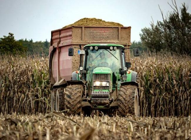 Sokfélét hallani a kukoricaárakról – nézzük, mi a reális!
