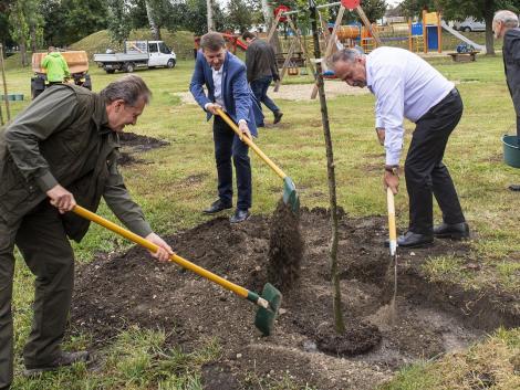 Tizennégyezer új fát ültetnek idén ősszel