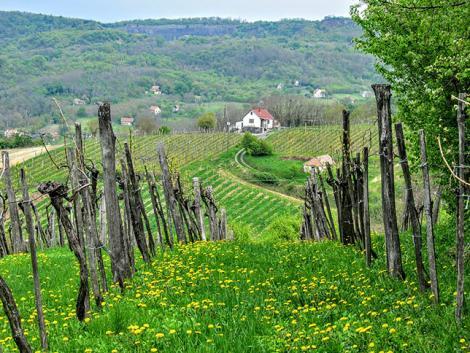 Újra élettel telnek meg a szőlőhegyek – napokon belül indul a zártkerti program