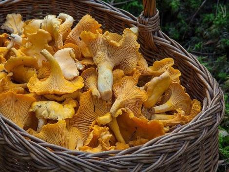 5+1 ehető gomba ősszel – irány az erdő!