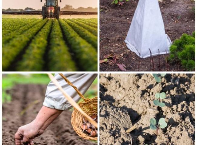 A növénytakarás, a tarackirtás és az őszi palántázás fortélyai