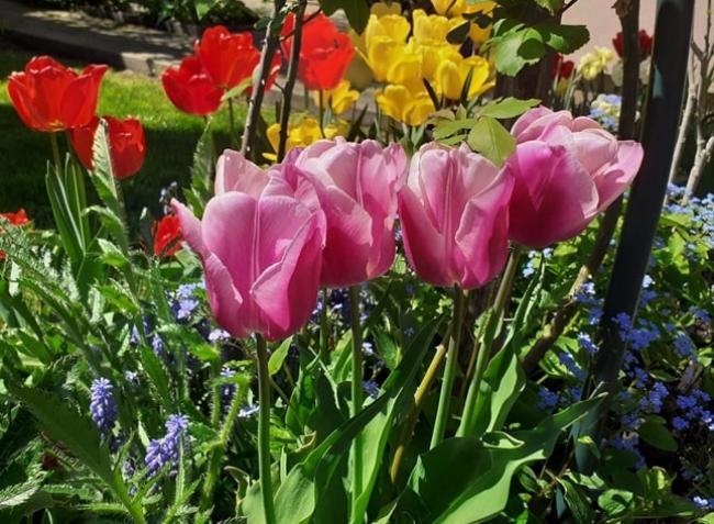 Tavaszi virágoktól pompázó kertet szeretnél? Most kell tenned érte!