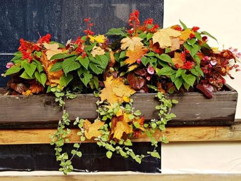 Nincs kerted? Sebaj! Így lehet ősszel is gyönyörű, színes balkonod!
