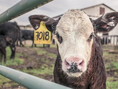Celebek variálnák át a mezőgazdasági támogatások rendszerét