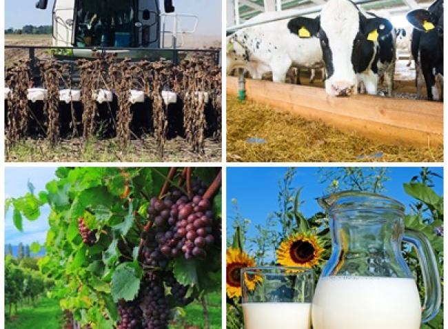 Fontos információk pályázatokról, kukoricaárakról és szőlővédelemről