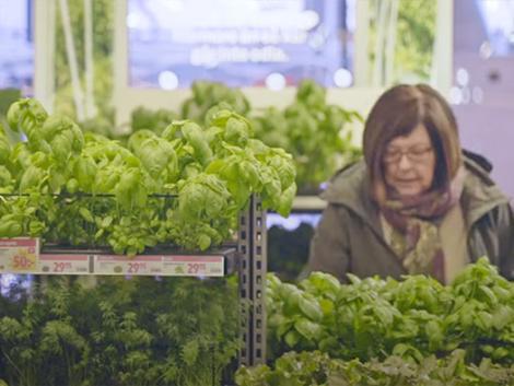 Zöldségtermesztés az áruházban – ennél nem lehet frissebb
