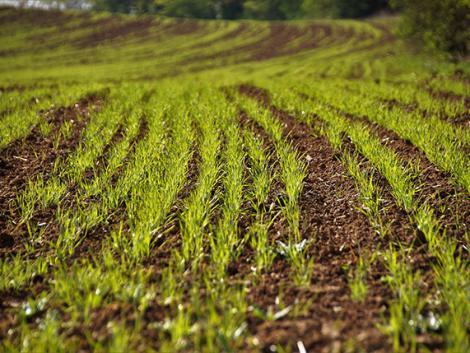 Keserves év az idei a gazdálkodóknak, mégis megkezdték az őszi vetést