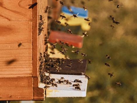 Itt az új őrület: így lehet bárkinek saját méze