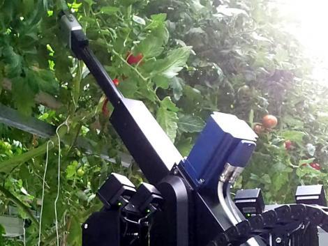 Elkélne neked is egy paradicsomgondozó robot?