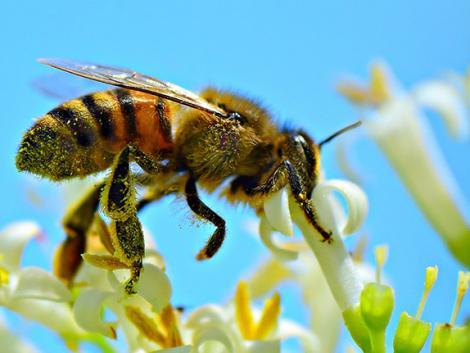Ennyire komoly a baj: 7,5 millió euró a méhek megmentésére