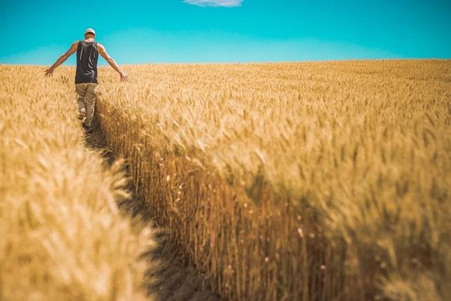 fiatal gazda a gabonatáblában