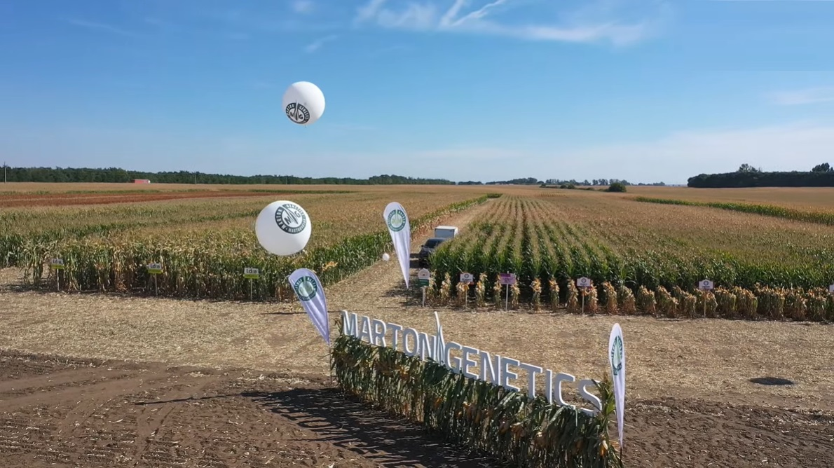 Marton Genetics kukorica