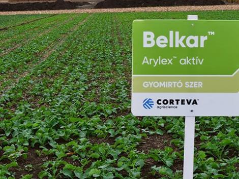 BELKAR™ – egyedi hatásmechanizmusú, őszi posztemergens repce gyomirtó szer