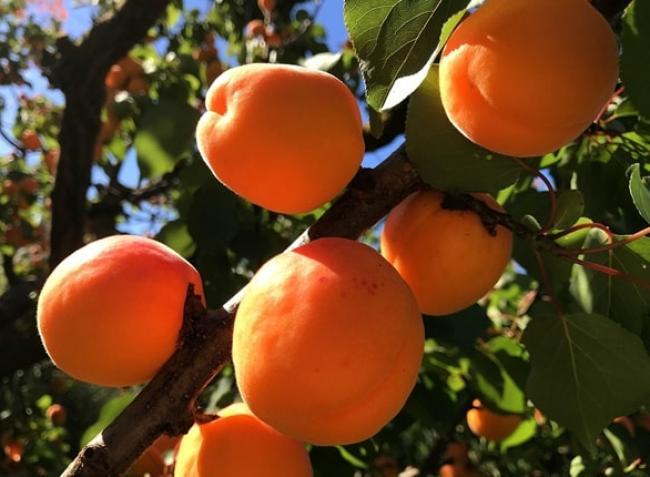 Az olcsó gyümölcs korszakának végleg leáldozott