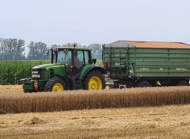 A három hete tomboló hőség a gabonatermesztők minden számítását áthúzta