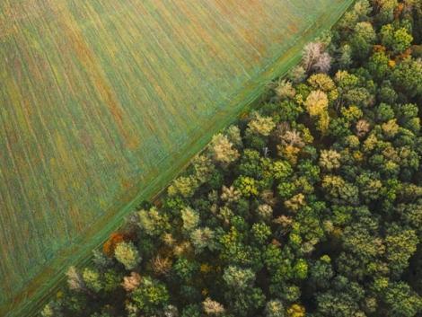 Mutatjuk, mennyi támogatást kapott az erdőgazdaság az utóbbi 5 évben