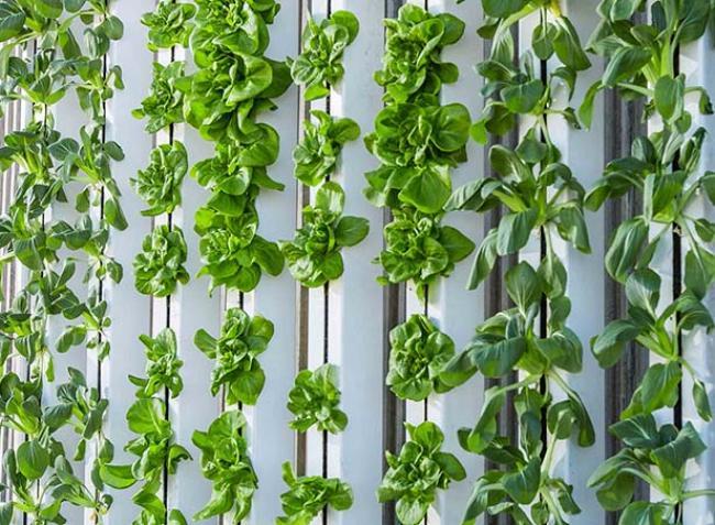 Termőföld és napfény nélkül, konténerben terem a jövő zöldsége