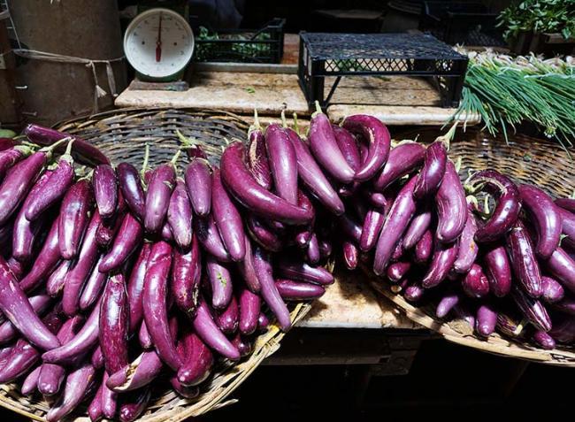 Bingó!  A génmódosított padlizsán főnyeremény a termesztőknek
