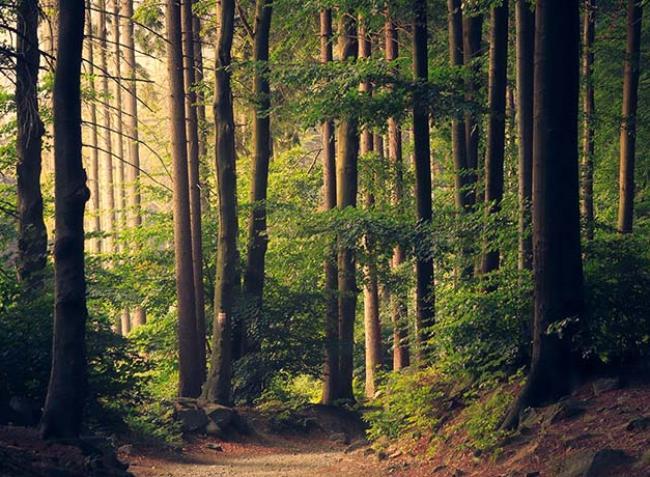 Kell új erdészeti stratégia, de a mostani EU-s tervezet nem megfelelő