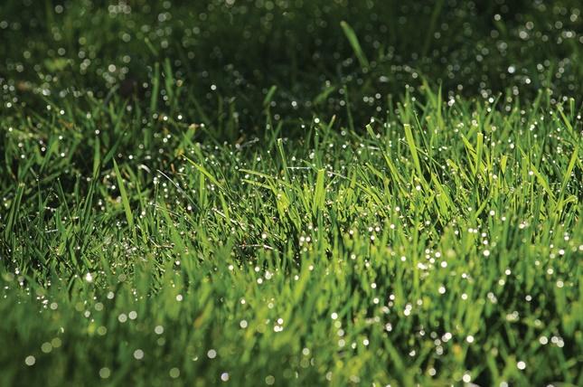 fű a kertben