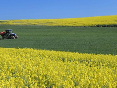 Fejlődő agrárium: sok pályázat, több támogatás, magasabb profit