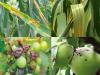 Saját agrármeteorológia állomás: pénzt, időt, terményt takarít meg