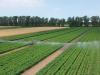Ezekkel az intelligens és takarékos öntözési rendszerekkel ellensúlyozható a szárazság hatása