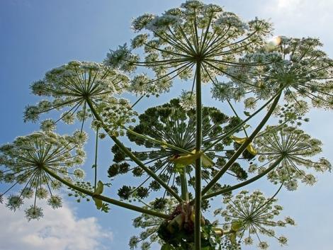 Gonosz növények: ezektől tartsd távol magad!