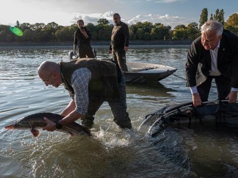 Vizát telepítettek vissza a Dunába