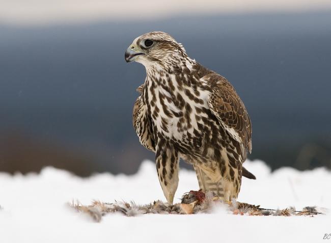 Itt a szomorú valóság! Nyilvános a madárfajok új Vörös Listája!