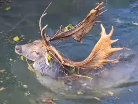 Halat nem fogott, de szarvast mentett a vízből a horgász