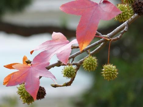 Kevésbé ismert, izgalmas díszfák, melyekkel te is könnyedén feldobhatod a kerted!