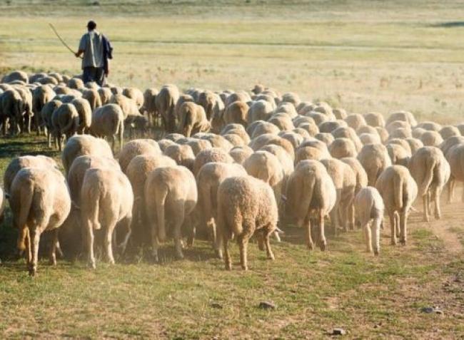 Az állattartóknak mindig is fontos volt ez a nap – hogy védi meg Szent Vendel a jószágot?