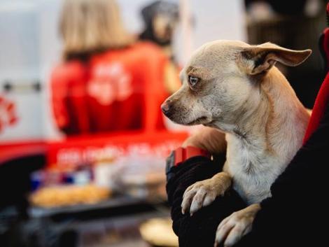Így előzhető meg rengeteg kutya értelmetlen halála