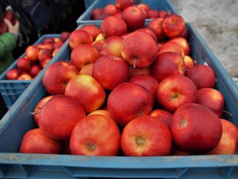 Itt tartunk: tavaly már duplaanyi almát hoztunk be külföldről, mint amennyit kivittünk